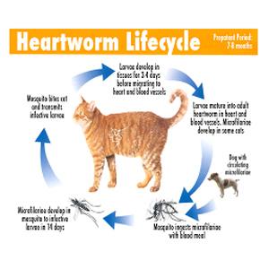 feline parasites