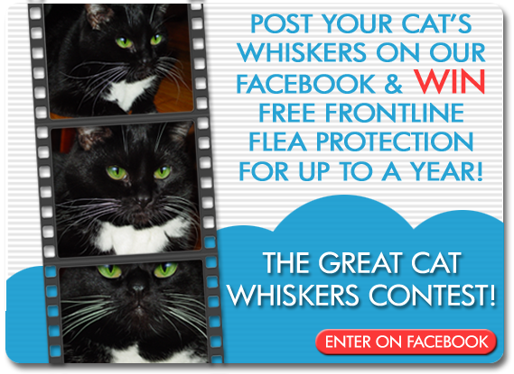 Whiskers Contest